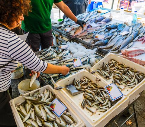 איפה לקנות דג ברמונדי ישראלי